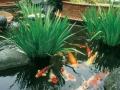 Декоративные водоёмы