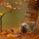 <b>Осенние работы в саду</b>