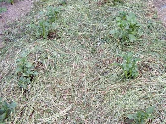 разумное земледелие, нетрадиционное земледелие