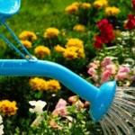 <b>Когда и как правильно поливать растения на огороде</b>