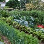 <b>Как увеличить огород</b>