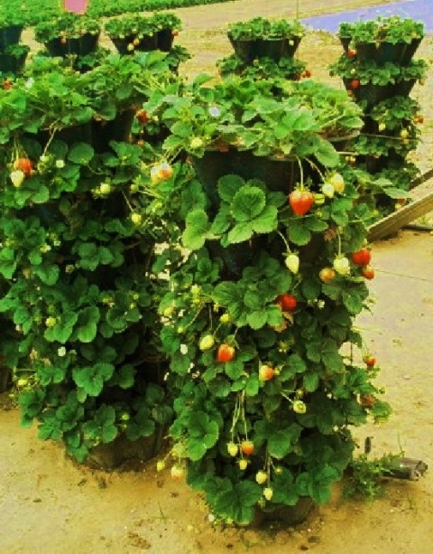 Как увеличить огород