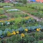 <b>Семинар «Первые шаги в природном земледелии»</b>