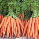 <b>Выращивание моркови</b>