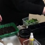 <b>Мастер-класс «Выращивание рассады»</b>