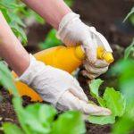<b>Защита растений от вредителей</b>