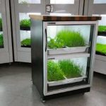 <b>Интересное устройство для выращивания растений</b>