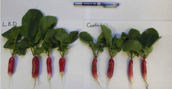 фитолампа для растений-ускоряем рост