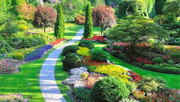 дизайн садового участка 6 соток своими руками фото бюджетный вариант