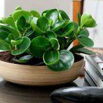 <b>Комнатные растения.Секреты правильного ухода.</b>